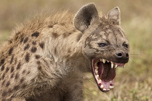 Man-Eaters: 12 Animals That Have Eaten Humans