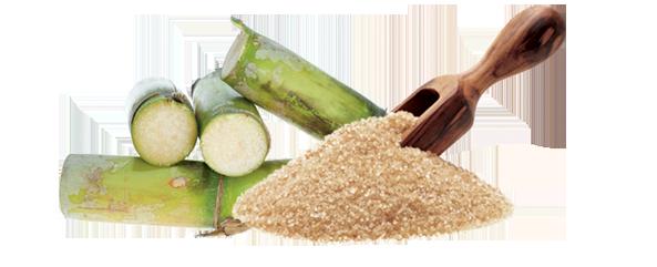 Sugar and sugar cane